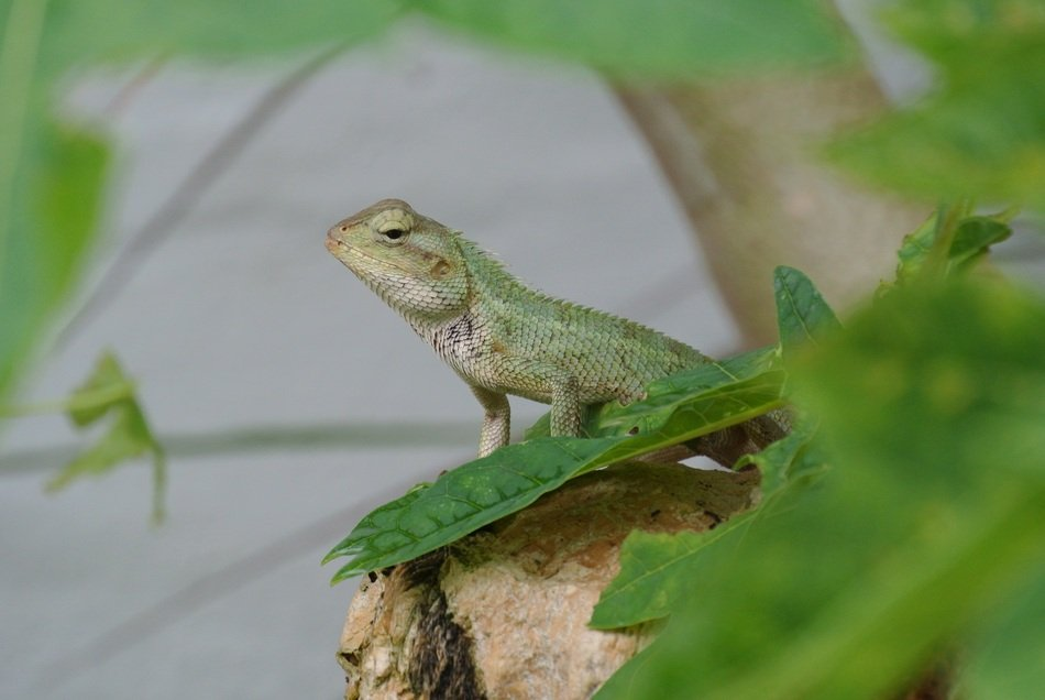 exotic green lizard in nature
