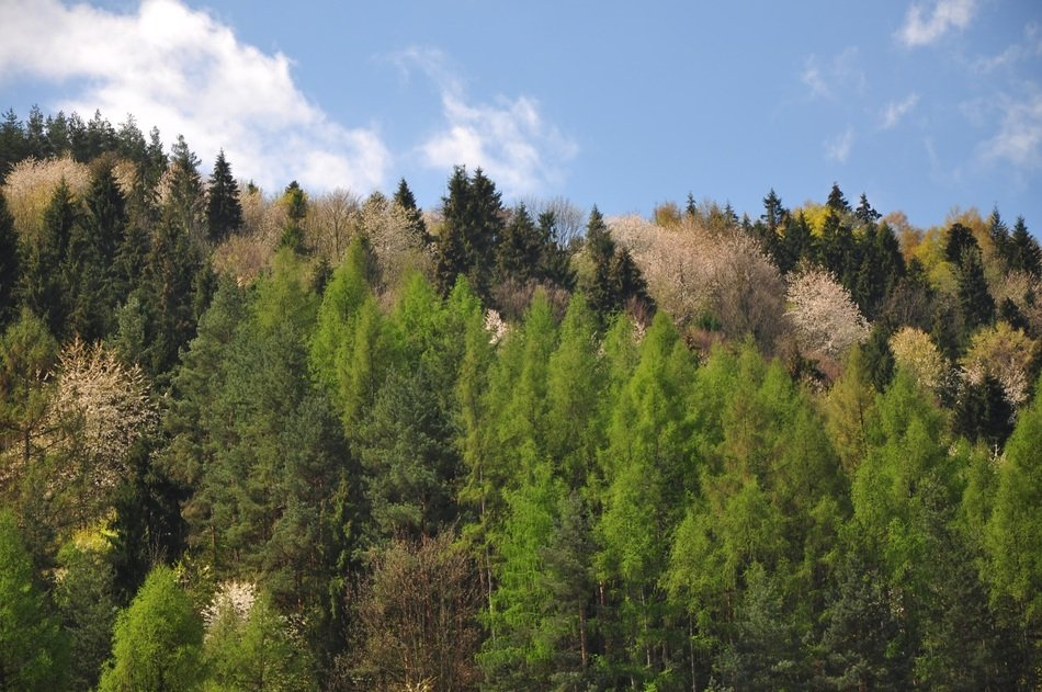 green trees on the hills in the forest
