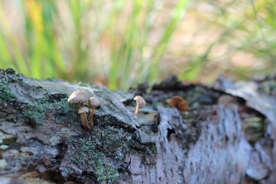 small mushrooms on birch bark