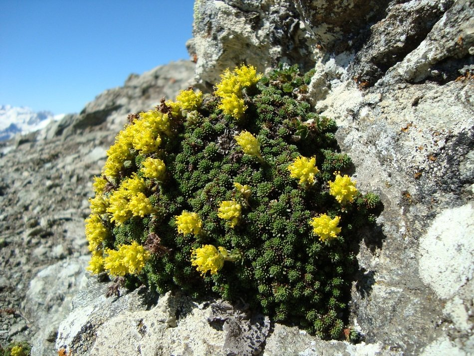 extraordinary Mountains Plant