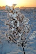 Snow covered small tree