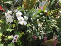 white orchids in the tropical garden