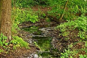 water in the thickets of green forest