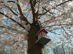 Birdhouse on a Cherry Tree