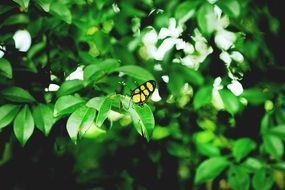 Butterfly on a green leaves