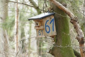 Nesting Box on a moss covered tree