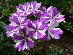white-purple flowers as a decoration