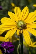 insect on a yellow flower under the bright sun