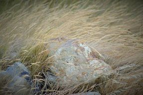 rocks on the wild meadow