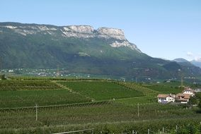 panorama of green vineyards against the backdrop of mountains in South Tyrol