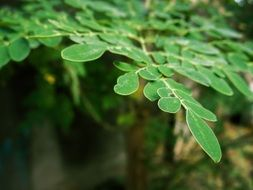 plant with unusual green leaves close-up