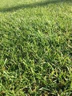 Picture of green Grass Field
