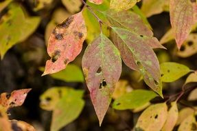 beaten fall foliage