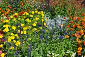 multi-colored flowers on a flowerbed in the garden