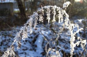 ice on a branch of a plant