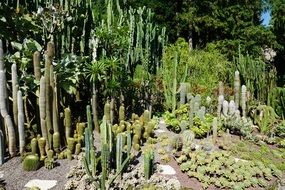 cacti on a flower bed in a botanical garden on a sunny day