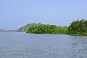 mangroves near estuary in india