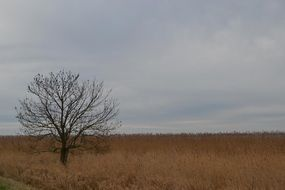 tree in a field with dry grass