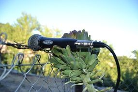 microphone on a artichoke closeup