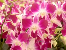 pink-white orchids as a decoration