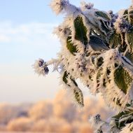 Beautiful frozen trees in the cold winter