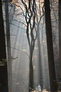 Forest with Fog romantic scene