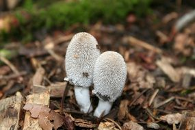 cute little mushrooms in the forest