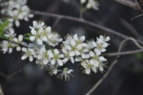 white flowers as a spring decoration