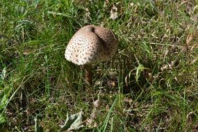 toxic mushrooms on the wild meadow