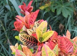 leaves of various colorful colors
