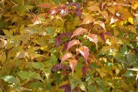 colorful autumn foliage close up