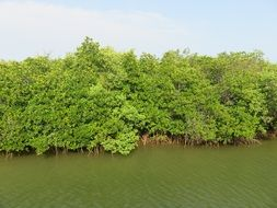 bright green vegetation near muddy water