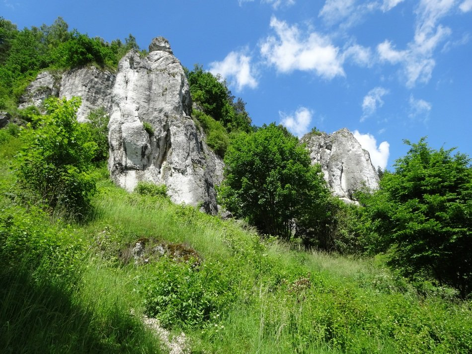 limestone rocks among green trees in poland