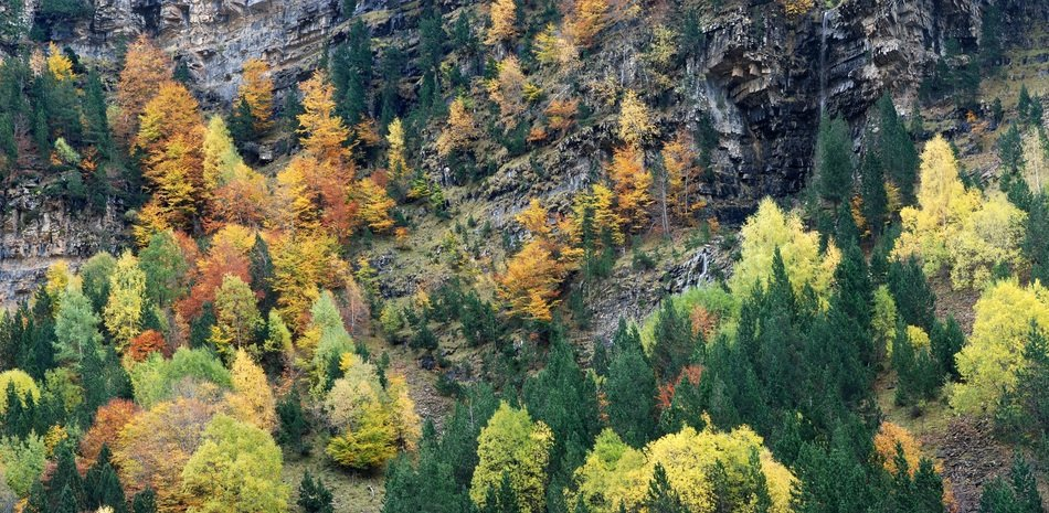 colorful Autumn Forest on Mountain side, picturesque landscape