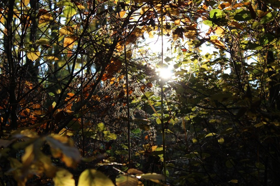 autumn foliage in the forest in bright sunlight