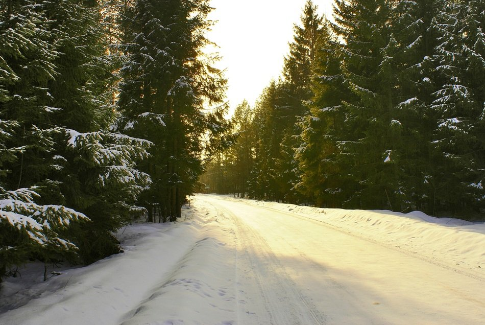 snowy road through a winter forest on a sunny day