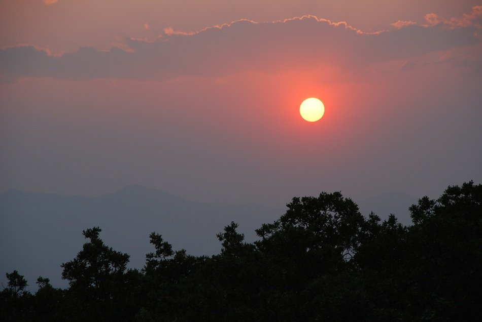 orange sun in the evening sky above the trees