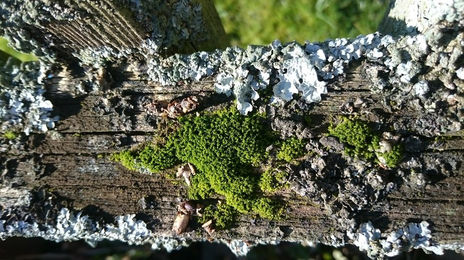 green moss and lichen on a tree trunk