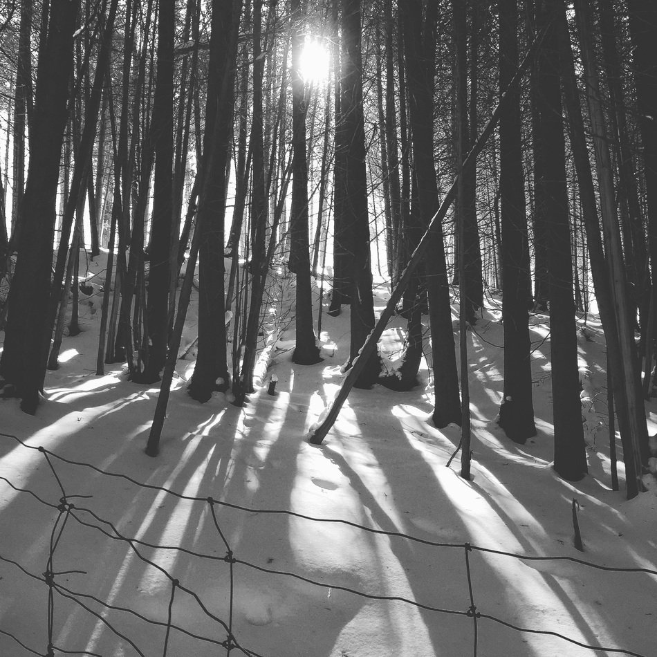 sunset behind forest, trees with shadows on Snow, Black And White