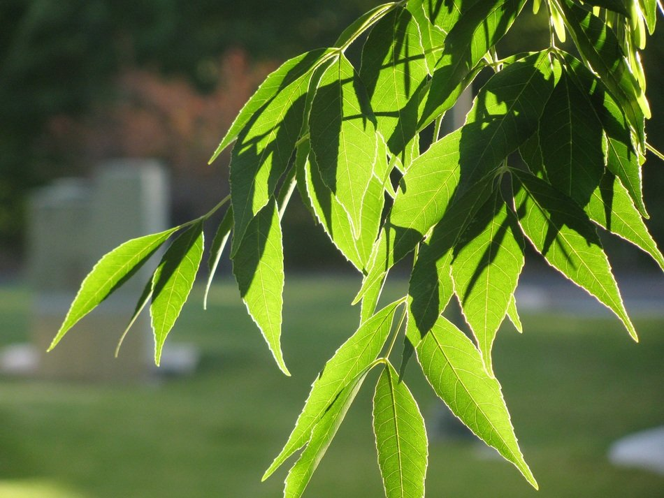 Green foliage on tree