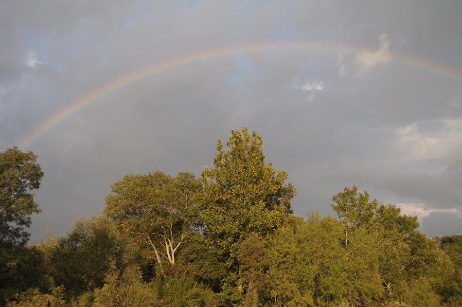 rainbow in the sky over green trees