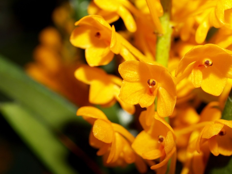 small bright yellow orchids close-up