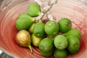 green Figs on Branches in red bowl