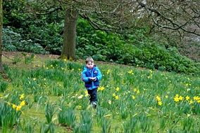 child on a flowering meadow