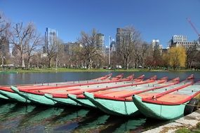 swan boats in a park in boston