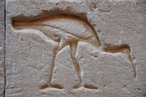 bird on the wall of an egyptian temple