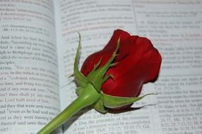 Rose Bible Words Religion Book
