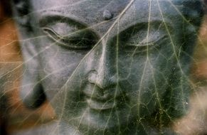 buddha face on the tree leaf