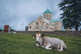 cow resting on the background of the Georgian Church of the Holy Trinity
