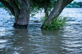 High Water by the tree